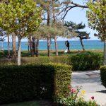 Blick von der Terrasse auf den weltberühmten Kreidefelsen